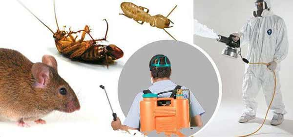 Benefits of using pesticides for controlling the insects