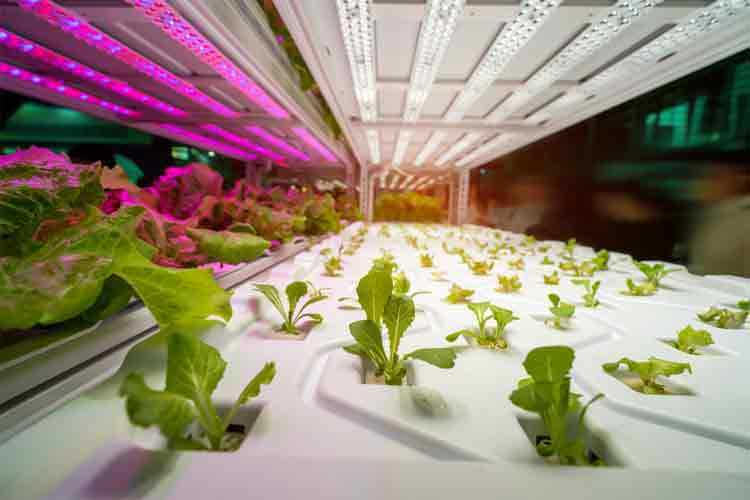 Make your own grow light system